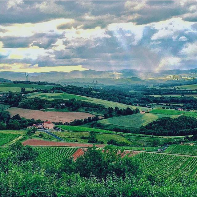 , © Thomas Morgan - Kermit Lynch Wine Merchant