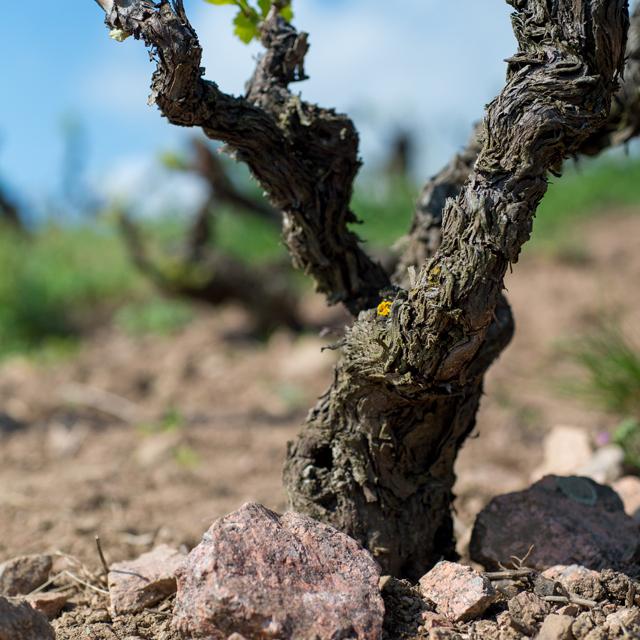 , © Dominik Fusina - Kermit Lynch Wine Merchant