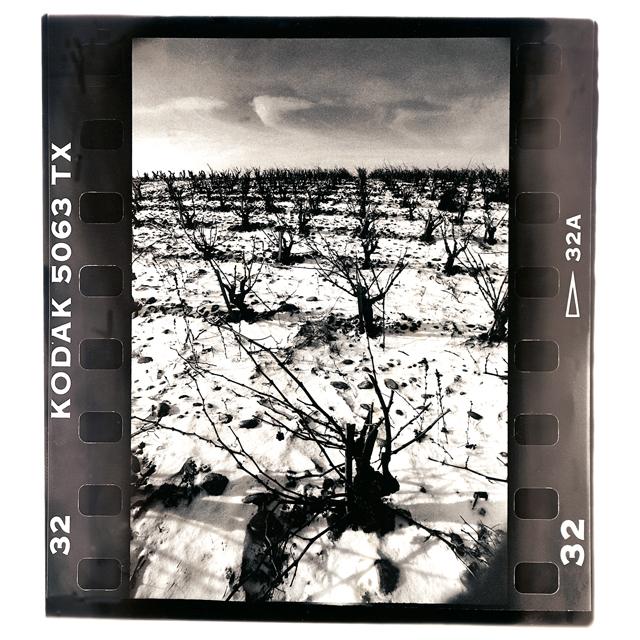 , © Domaine du Vieux Télégraphe - Kermit Lynch Wine Merchant