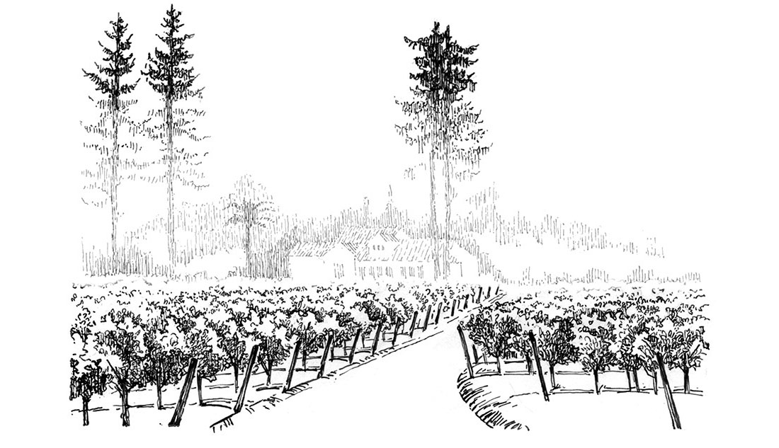 <p>Fog hovers over the vineyard in the early morning and evening. </p>