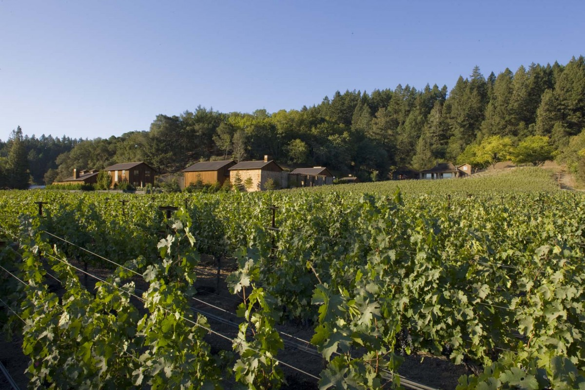Among The Vines: The Helms Vineyard