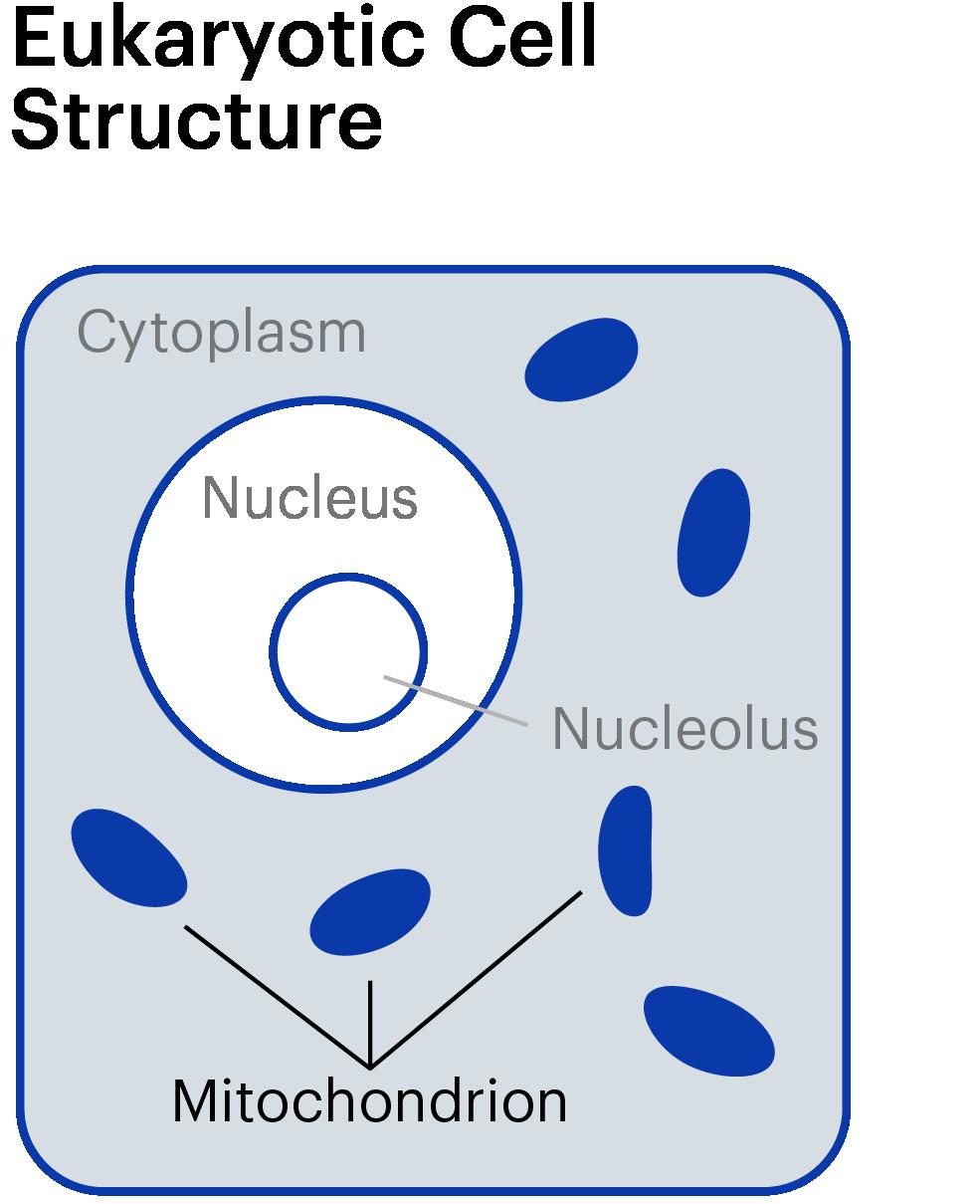 Mito Cellstructure  Graphic Wrap