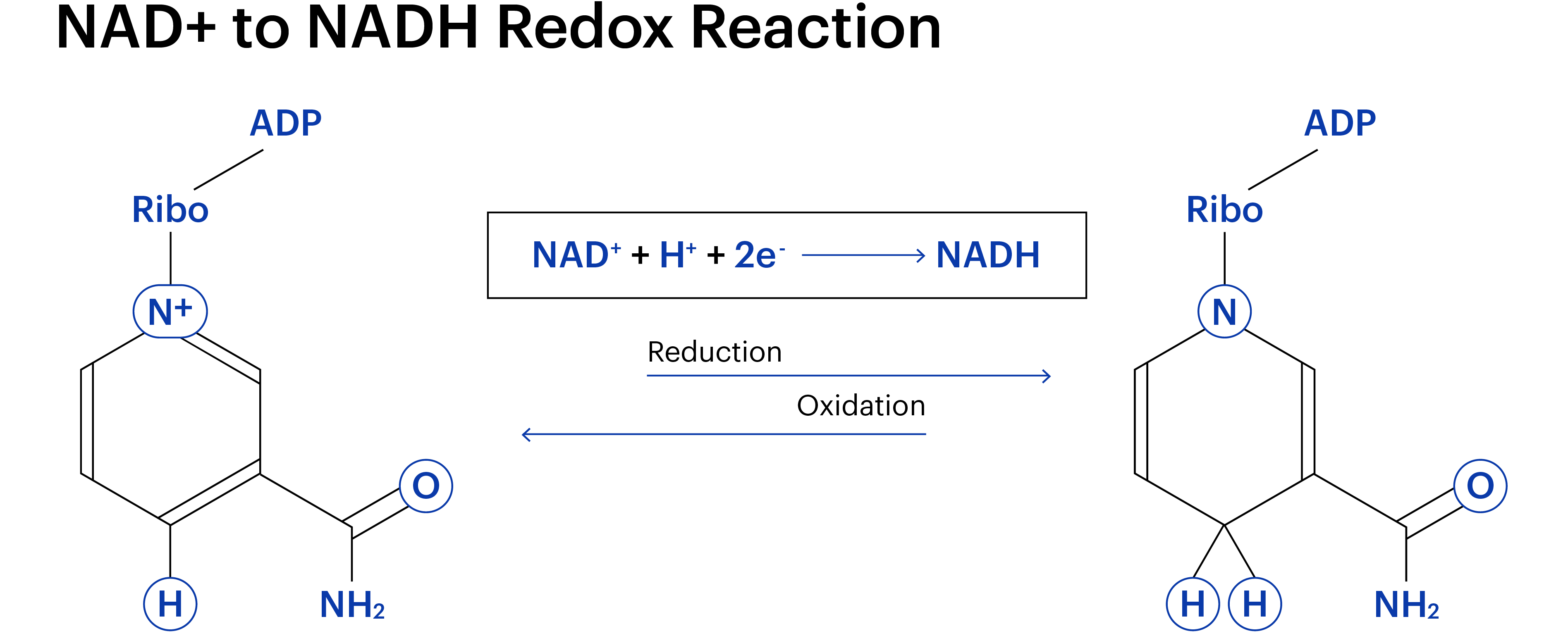 Nadnadh Celldiagrams Artboard 1