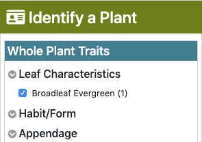 "an image of the ""identify a plant"" filters with ""broadleaf evergreen"" checked"