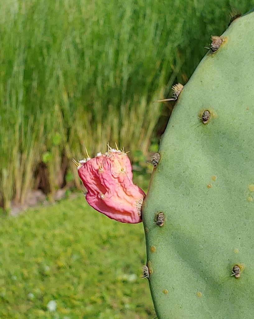 Flower in summer  Wilmington NC