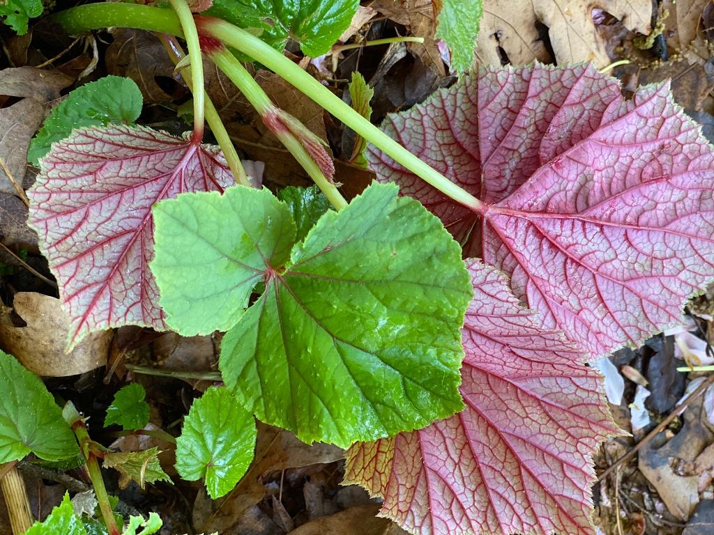 Underside leaf