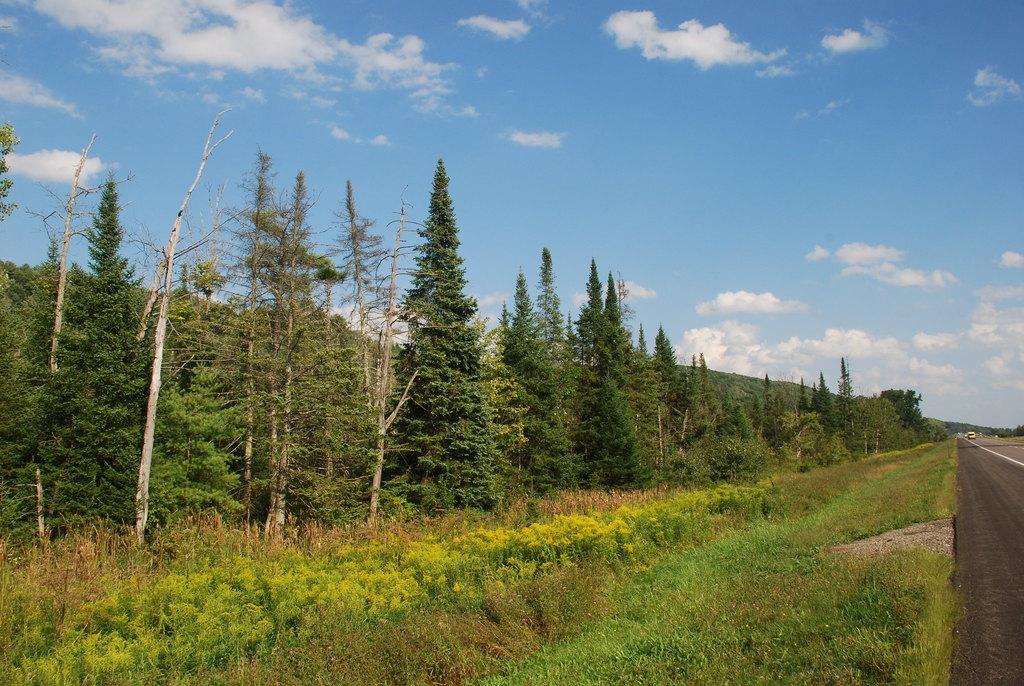 Row of trees (Steuben County, NY)-Late Summer