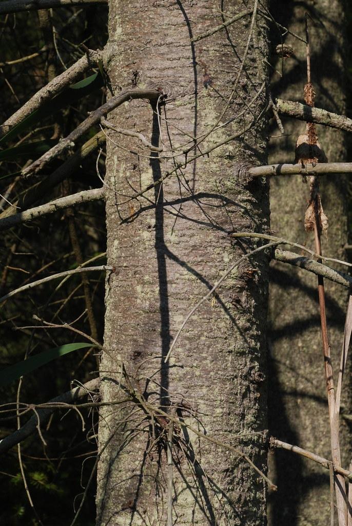 Tree trunk (Steuben County, NY)-Late Summer