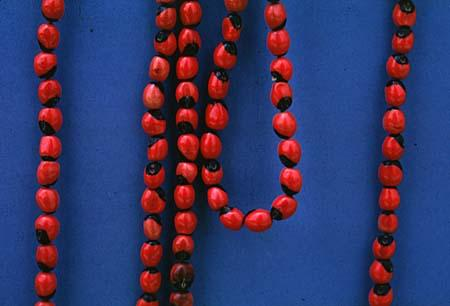Abrus precatorius beads