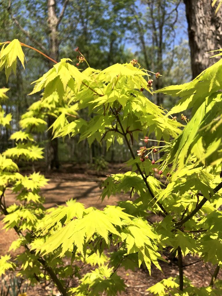 """""""Jordan"""" Flowers in April (Wake County, NC)"""