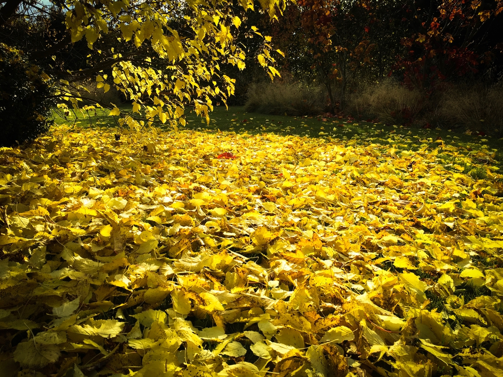 Leaves in the fall require clean up.