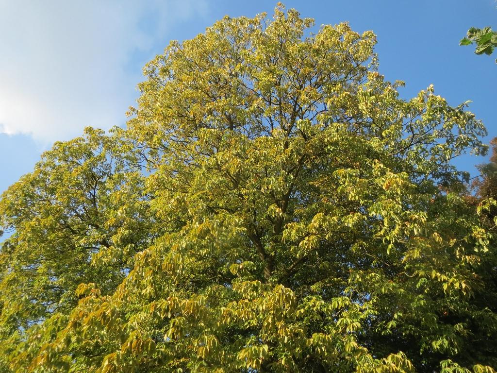 Tree in September