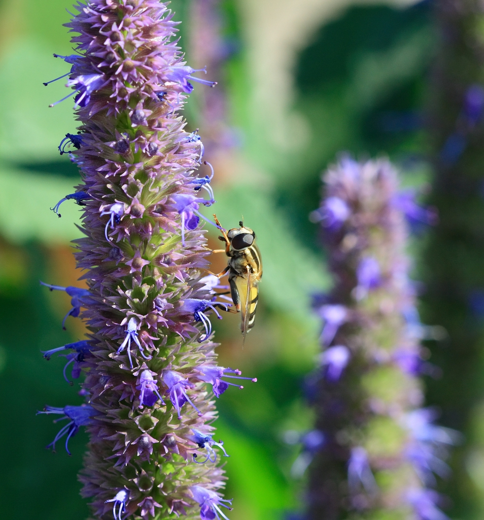 Attracts bees