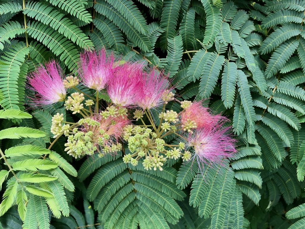 Flower & Leaves - Early June - Wake Co., NC