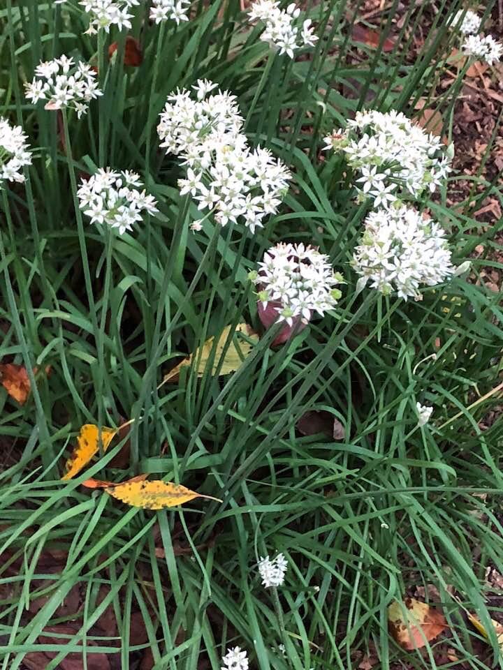 flowers, Wake County, NC