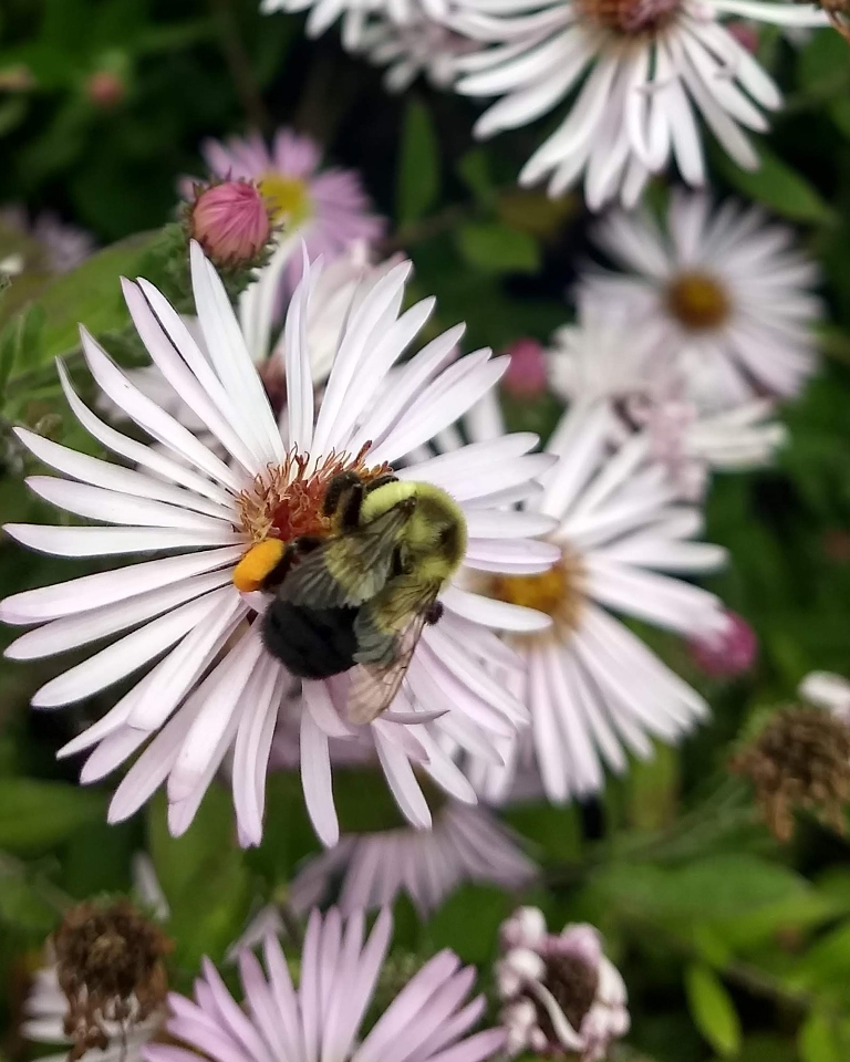 Flower with pollinator