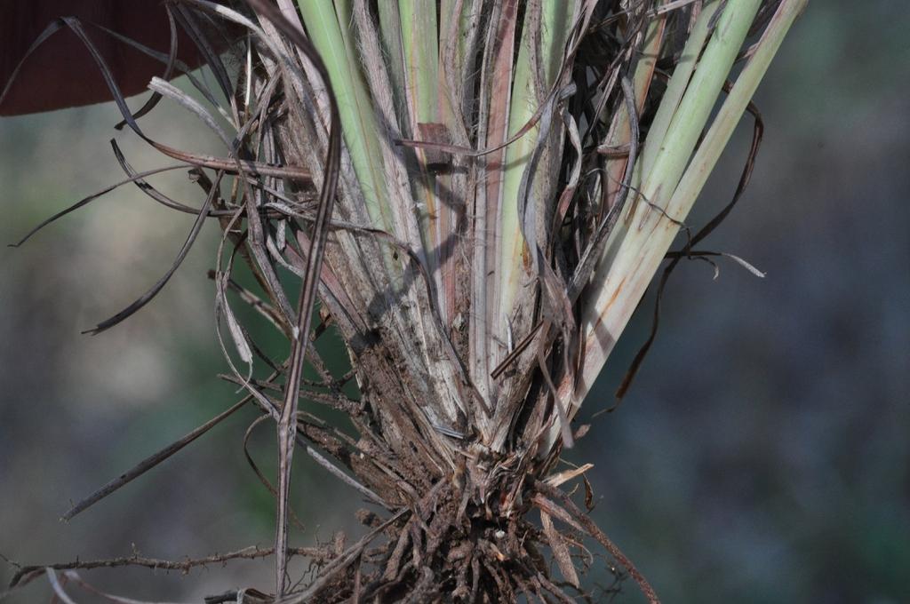 Base of plant