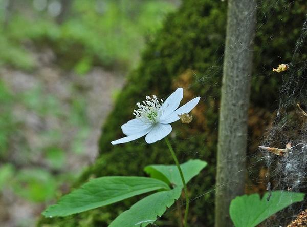 Erect flower