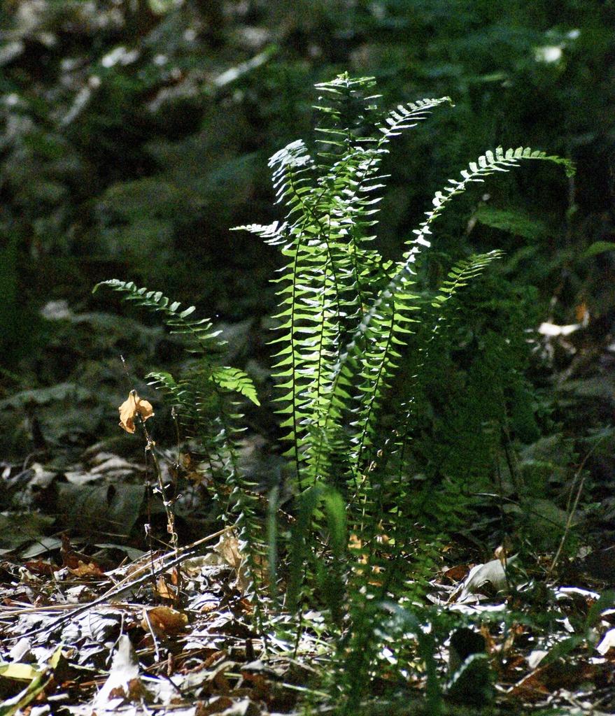 Plant Form - Halifax Co., NC