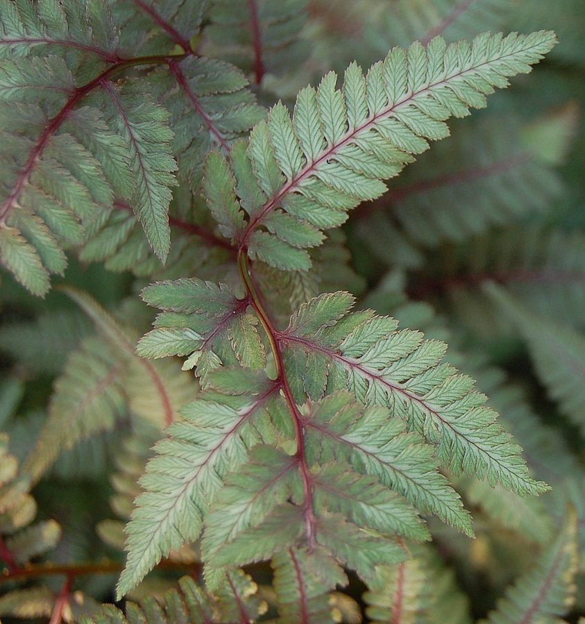 Close up of frond