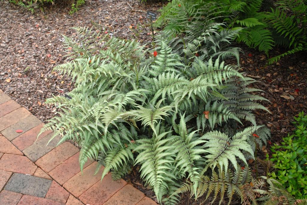 Form (Stowe Botanical Garden, NC)