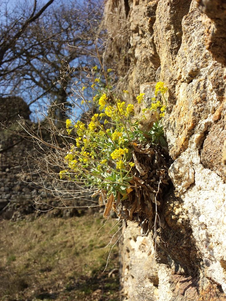 Habitat stone wall