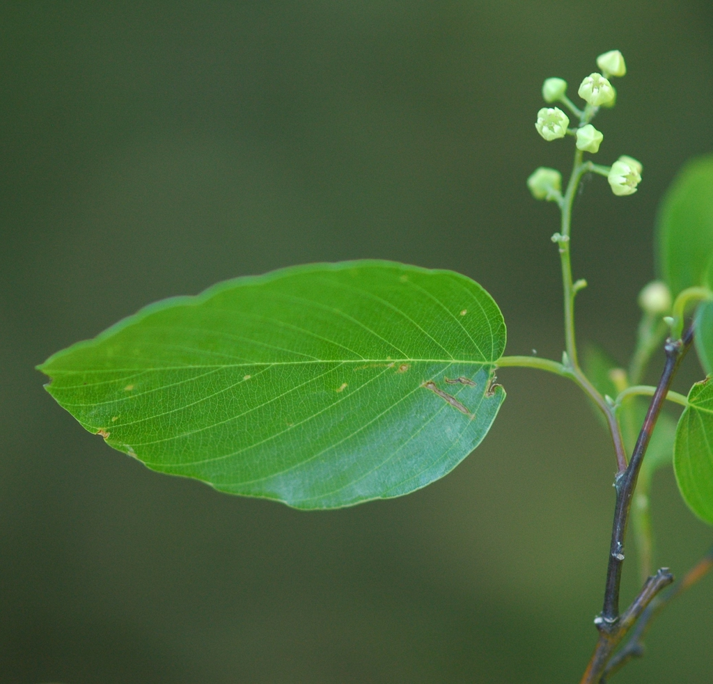 Leaf and flowers