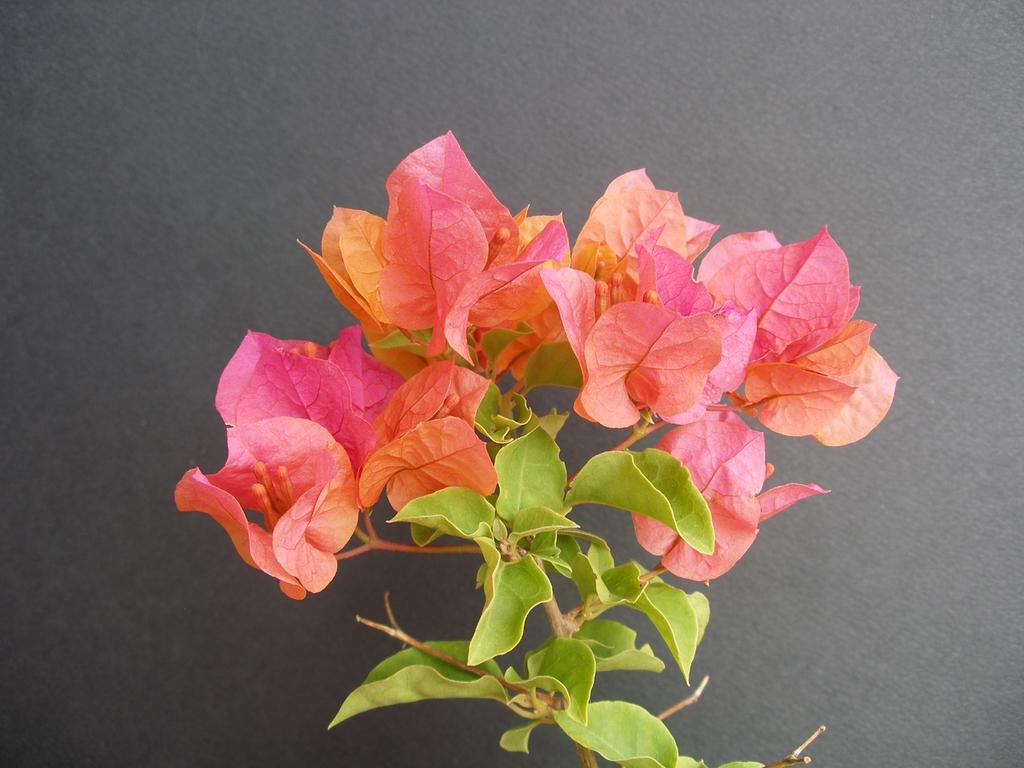 Orange to yellow blooms