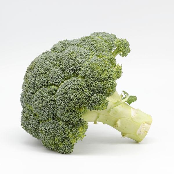 Brassica oleracea