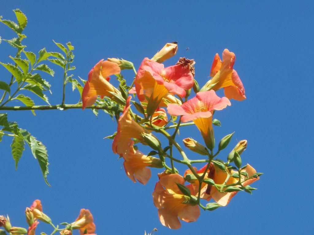 'Morning Calm' Flower