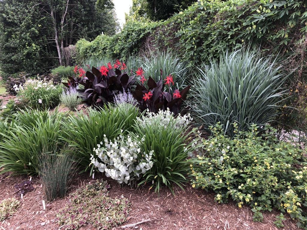Red Futurity - Form in Garden (Wake County, NC)