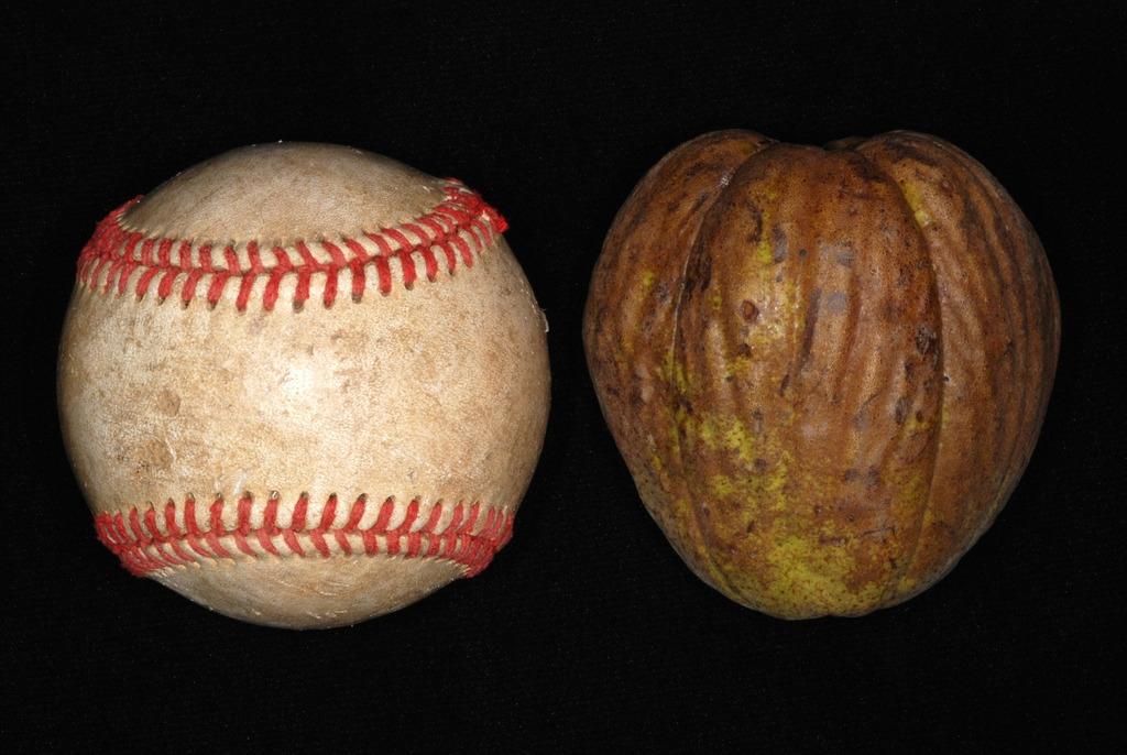 Large fruit (North Carolina, US)-Early Fall