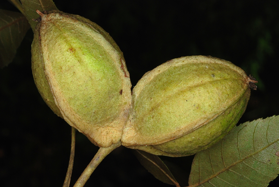 Fruits (Pickens County, AL)-Mid Fall