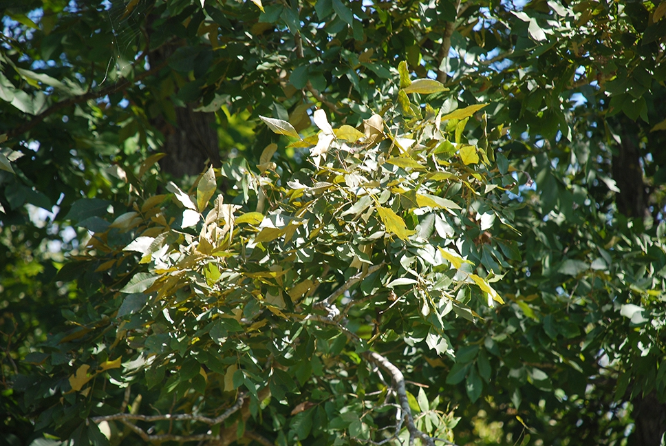 Branches and leaves (Pickens County, AL)-Mid Fall