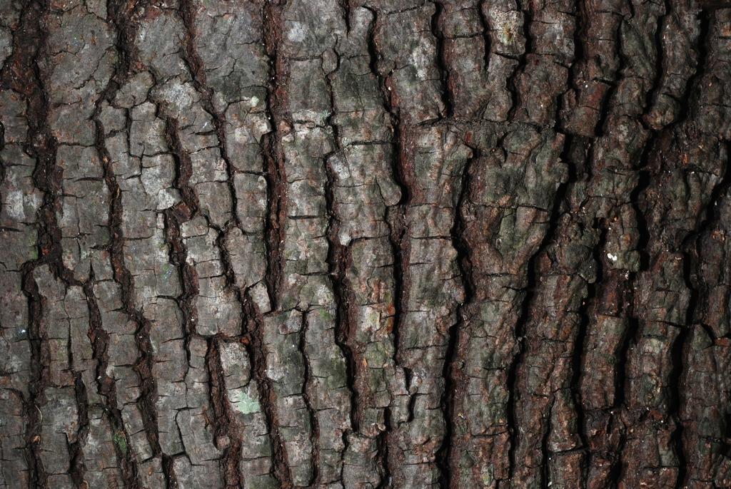 Close-up of bark (Seven Lakes, NC)-Early Fall