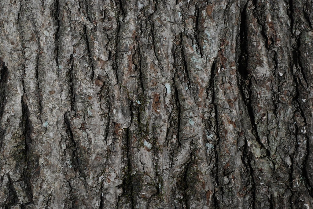 Bark close-up (Guilford County, NC)-Early Fall