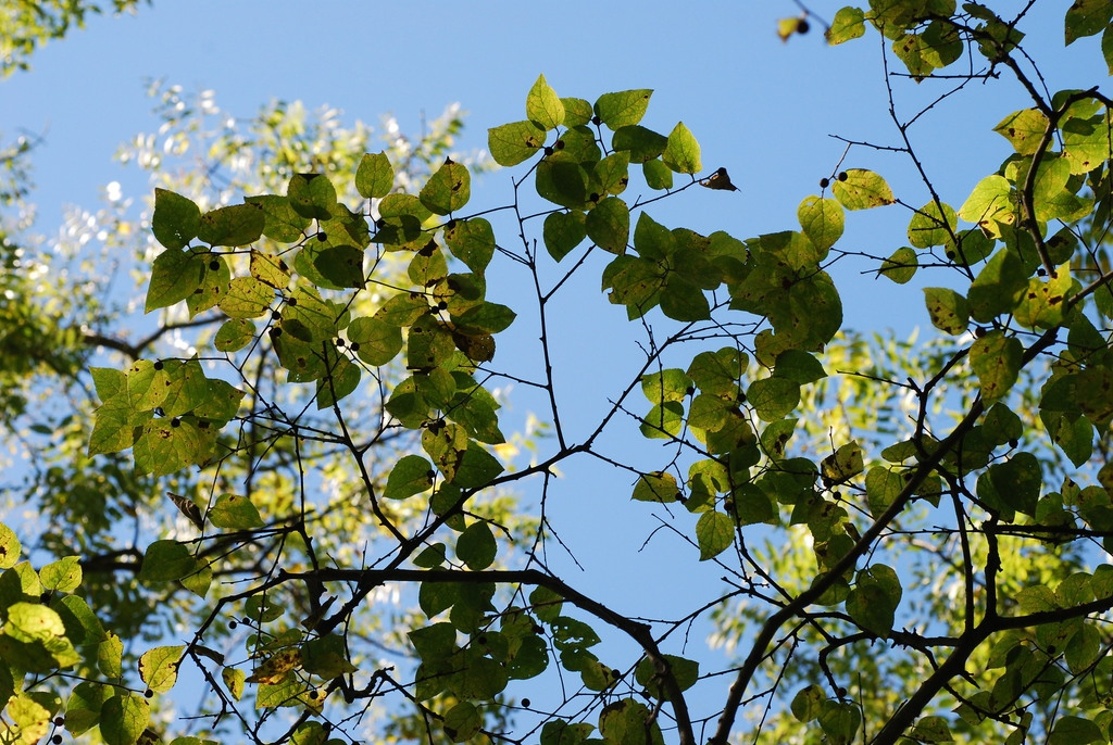 Branches (Schuyler County, NY)-Early Fall
