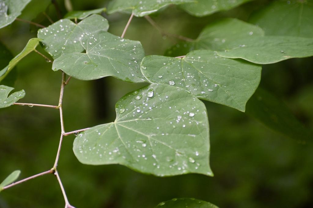 Leaves - Zig-Zag Pattern, Warren Co., NC