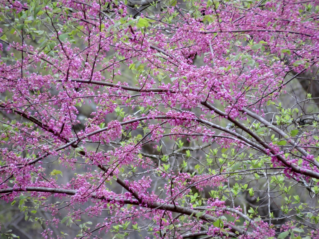 branches and flowers in bloom