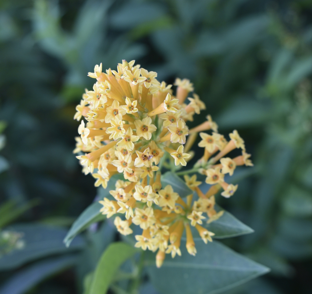 Flowers - Aug. 12, Wake Co., NC