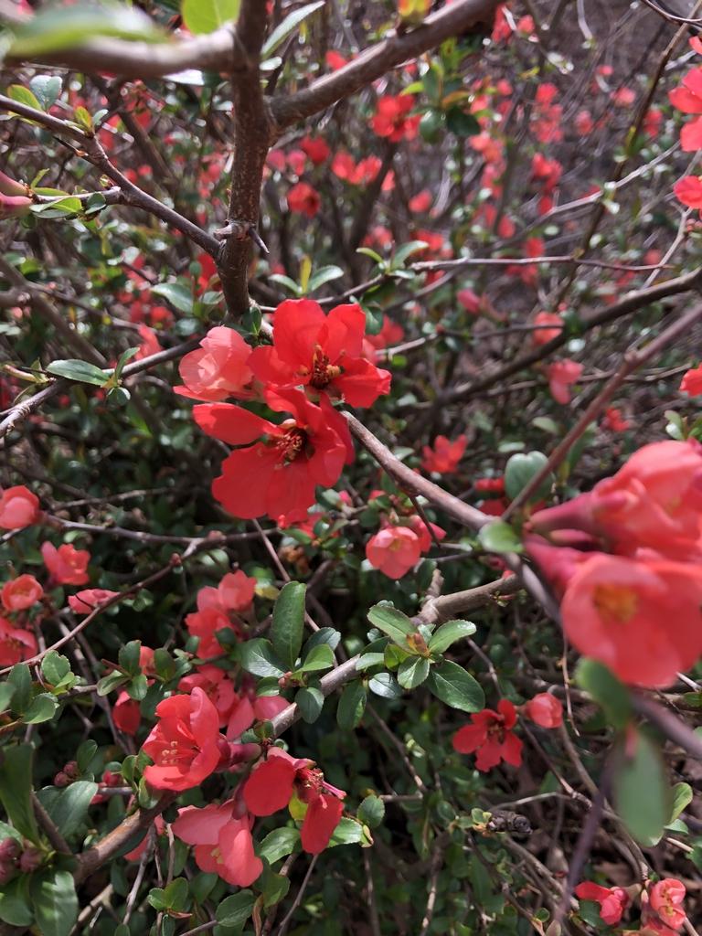 spring blossom, Wake County, NC