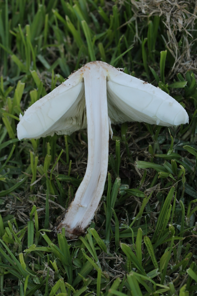 Section of mushroom