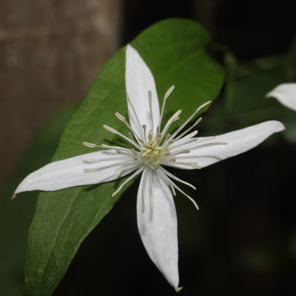 one flower (4 petals)