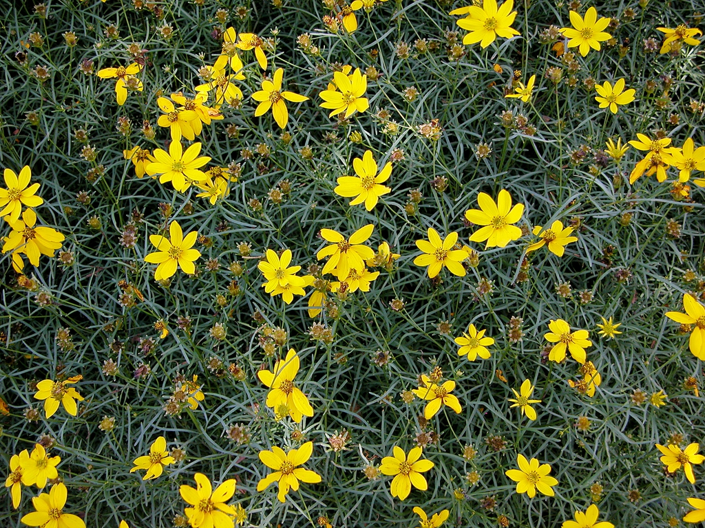 Flowers leaves, seed heads