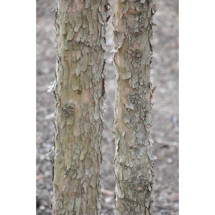 Trunk and bark of tree