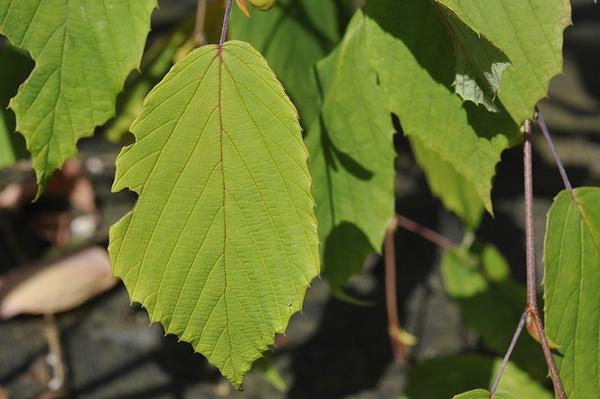 Close up of leaf.