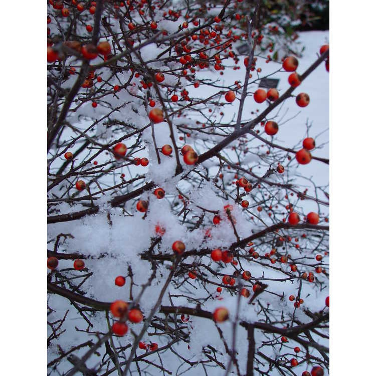 Fruit in Winter
