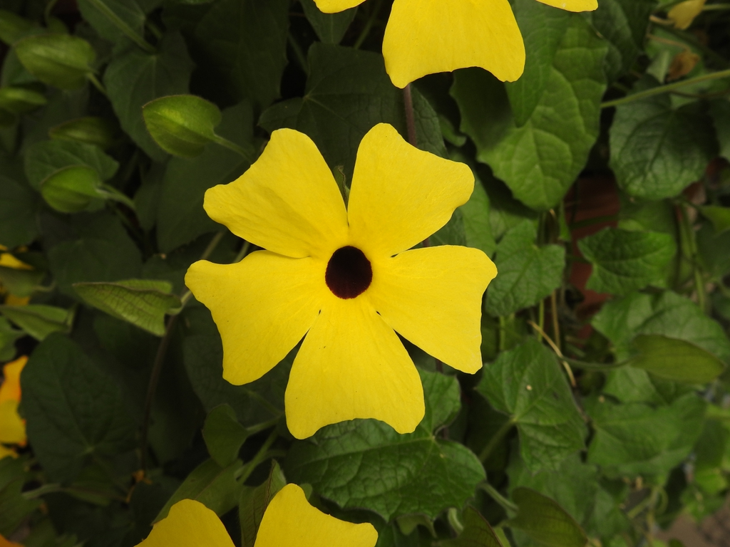 Flower from an unknown yellow cultivar