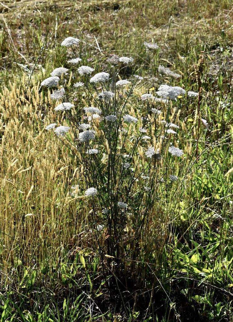 Form in a Field - June 1, Warren Co., NC