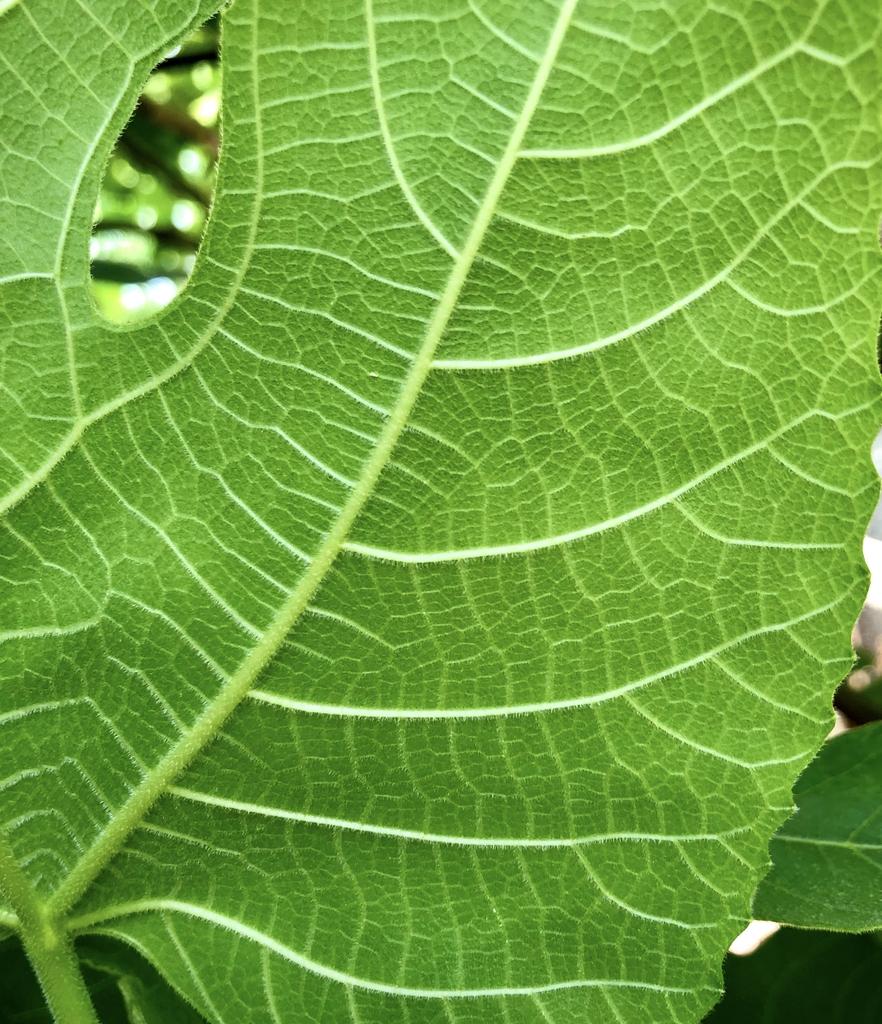 Underside of Leaf